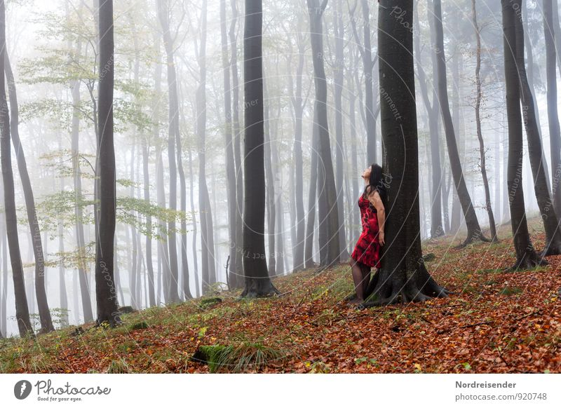 Young woman in a misty forest Lifestyle Joy Harmonious Well-being Senses Relaxation Calm Meditation Trip Human being Feminine Woman Adults 1 Nature Landscape