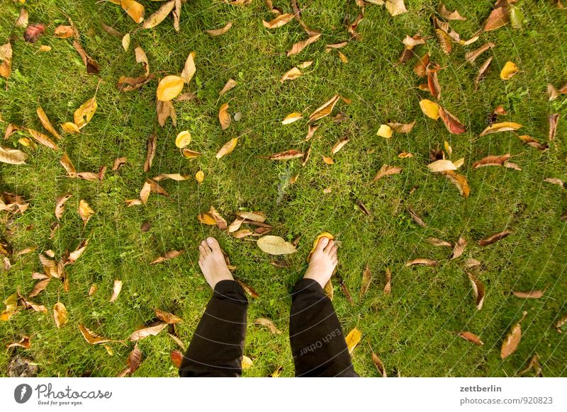 Standing at text space Garden Autumn Garden plot Meadow Lawn Grass Leaf Autumn leaves Multicoloured Feet Naked Toes Copy Space Bird's-eye view Human being