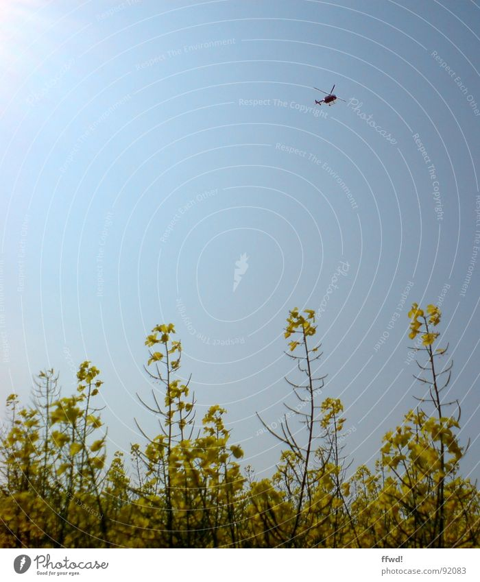 helifield Canola Canola field Yellow Helicopter Spring Sky Blue Sun Beetle Aviation