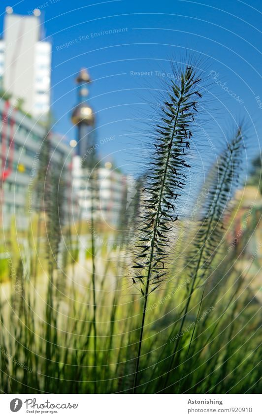 spires Environment Nature Plant Sky Cloudless sky Summer Weather Beautiful weather Grass Meadow Vienna Austria Town Capital city House (Residential Structure)
