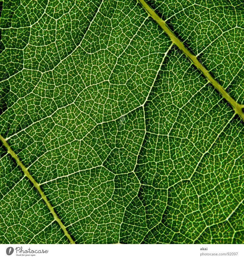 Sheet 4 Plant Green Botany Part of the plant Creeper Verdant Environment Bushes Back-light Leaf Background picture Tree Near Photosynthesis Mature Vessel Detail