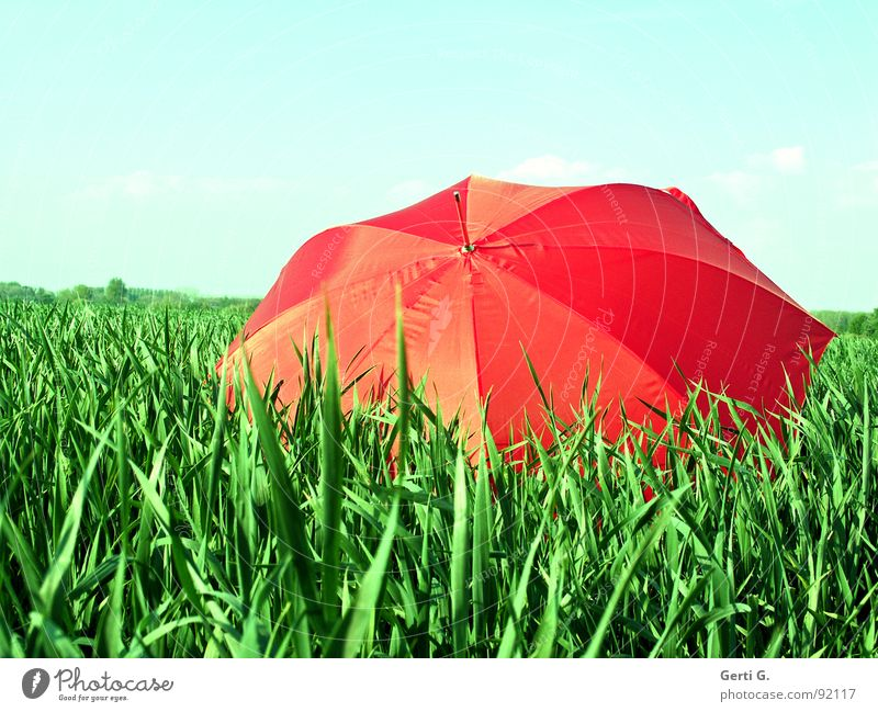 once again... Charming Sunshade Protective equipment Umbrella Red Summer Field Cornfield Fresh Multicoloured Greeny-red Agriculture Wind Blade of grass Movement