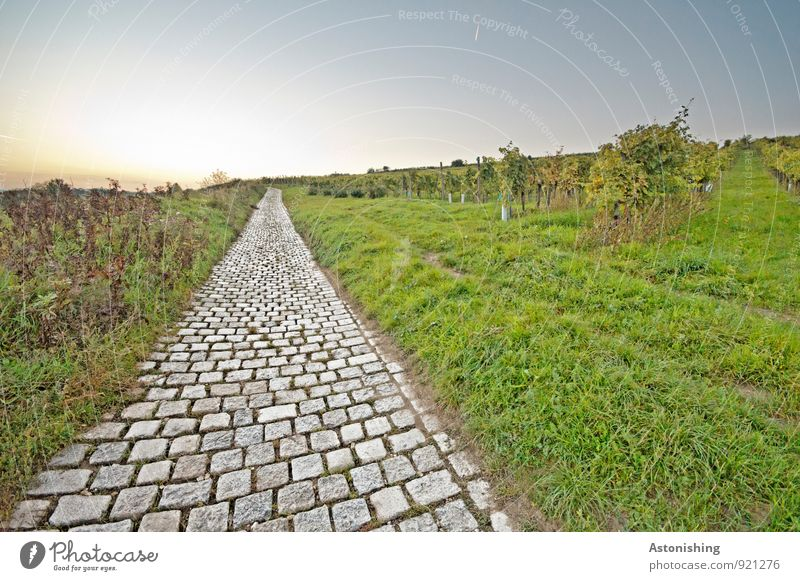 the old street Environment Nature Landscape Plant Sky Cloudless sky Horizon Sunrise Sunset Autumn Weather Beautiful weather Grass Bushes Meadow Hill Transport