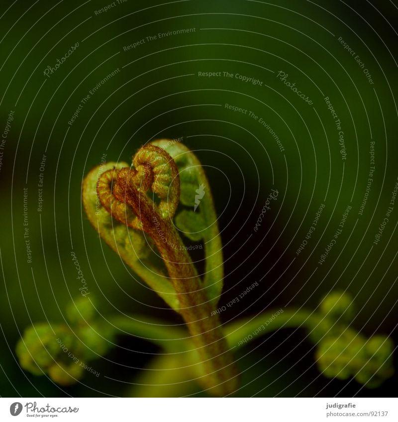 Nature Green Plant Summer Life Power Heart Growth Fist Shoot Pteridopsida Flourish Plantlet Convoluted