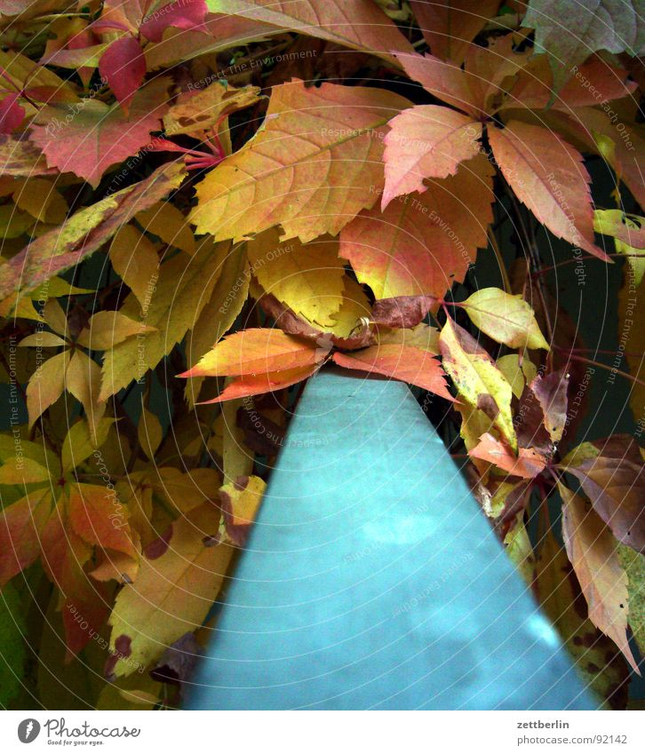 Blue Red Leaf Yellow Autumn Romance Handrail Autumn leaves October September Complementary colour