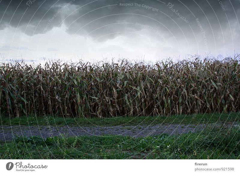 Sky Nature Plant Green Landscape Leaf Clouds Black Environment Autumn Lanes & trails Brown Horizon Weather Field Growth