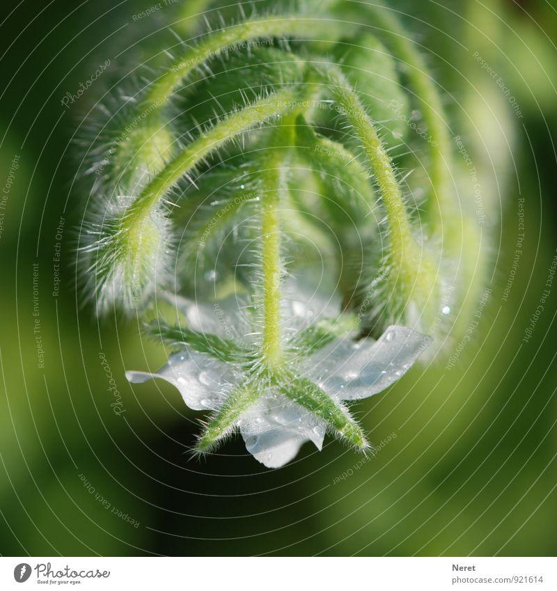 Nature Plant Green White Blossom Esthetic