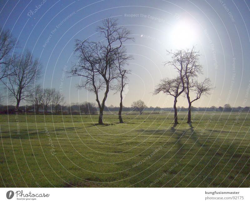 Tree Dark Meadow Grass Landscape Moon Night shot Celestial bodies and the universe Lower Saxony Werewolf
