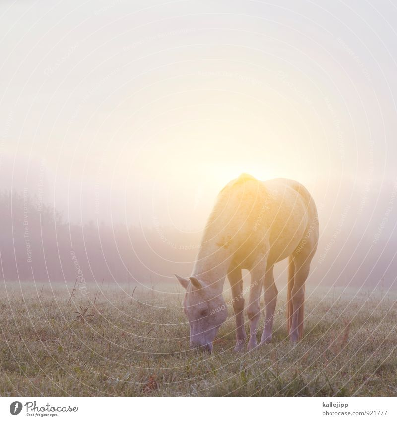 Ywd Environment Nature Landscape Plant Animal Cloudless sky Autumn Weather Beautiful weather Fog Foliage plant Meadow Field To feed Horse Farm animal Pasture