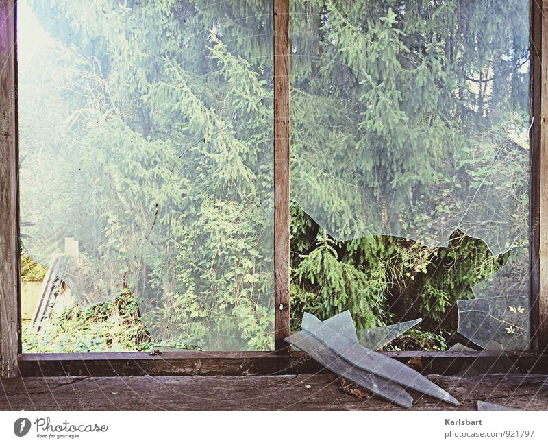 The window to the forest. Living or residing Flat (apartment) Garden House building Redecorate Moving (to change residence) Nature Sunlight Summer Autumn