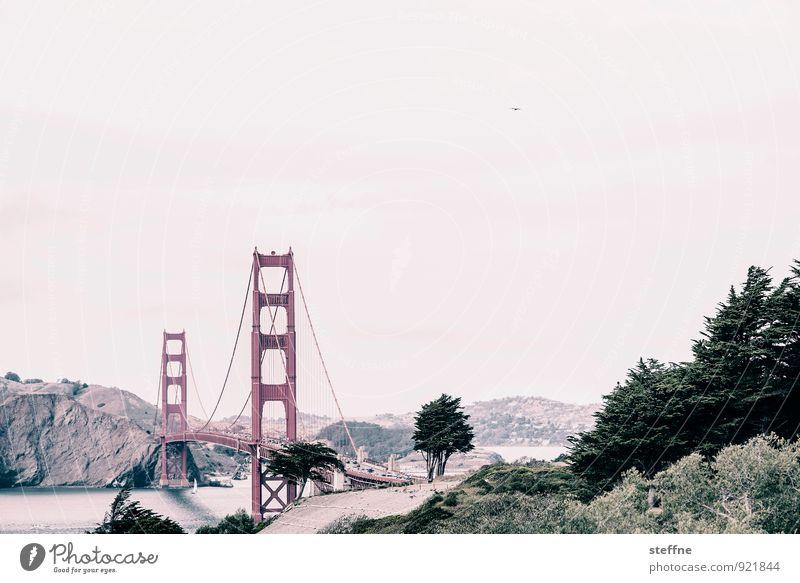 To golden times, Anne! Summer San Francisco USA Tourist Attraction Landmark Golden Gate Bridge Exceptional Colour photo Exterior shot