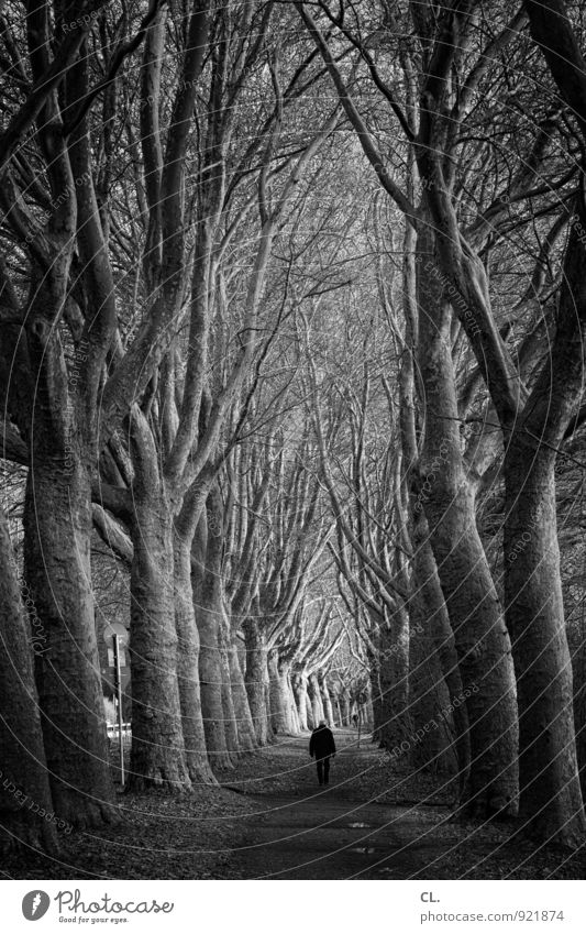 Human being Nature Tree Loneliness Landscape Calm Dark Environment Adults Life Sadness Lanes & trails Going Park Perspective Future
