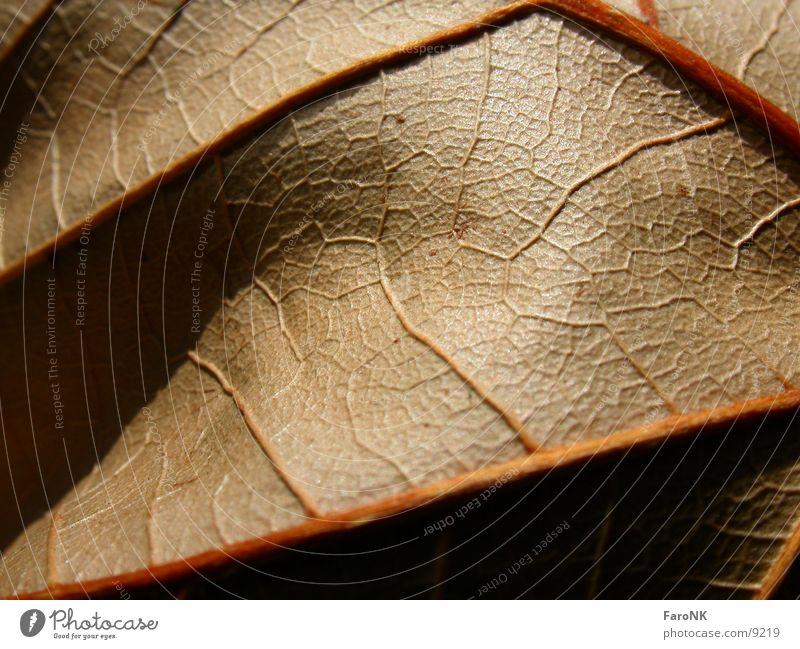 foliage Leaf Autumn Brown
