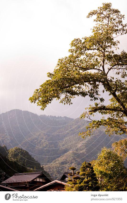 cherry leaves Environment Nature Landscape Plant Autumn Tree Japan Village Kansai Vacation & Travel Tourism Leaf Deciduous tree Autumn leaves Exterior shot