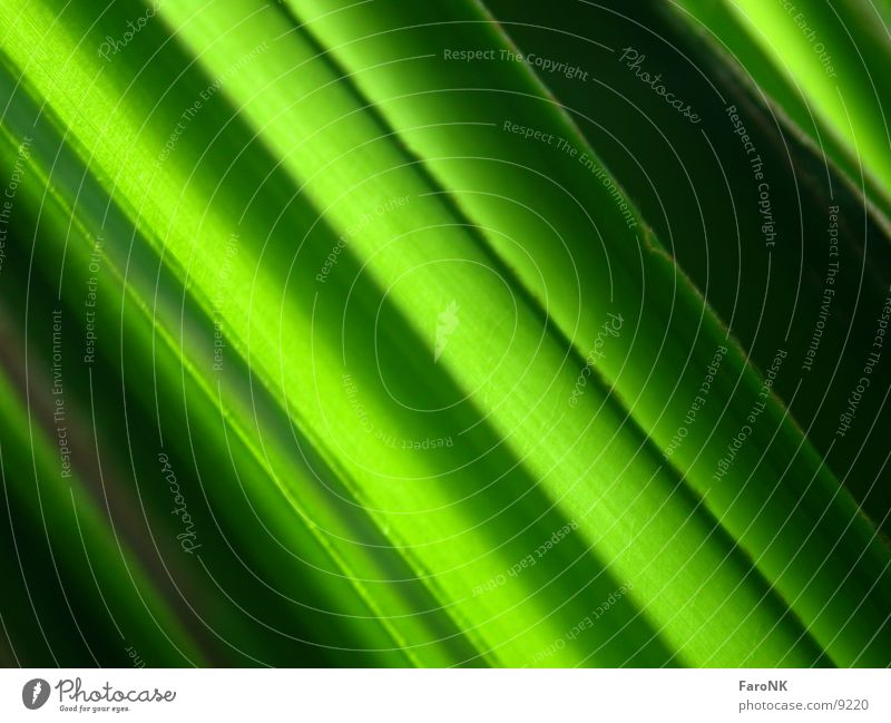 Palm leaf Leaf Green Palm tree Plant Macro (Extreme close-up) Close-up