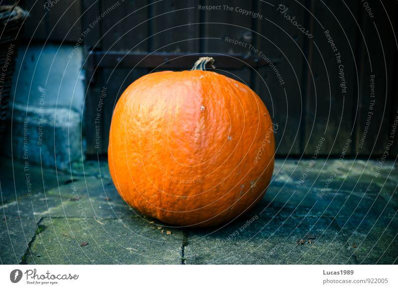 pumpkin Plant Pumpkin Thanksgiving Hallowe'en Healthy Dish Colour photo Exterior shot Copy Space left Copy Space right Copy Space middle