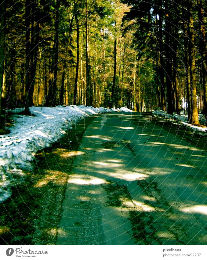in the forest... Winter Snow Tree Forest Street Old Cold Brown Green White Visual spectacle Roadside Colour photo Light Patch of light Deserted Empty