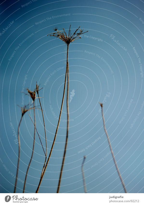 Nature Sky Blue Plant Autumn Death Environment Star (Symbol) End Thin Transience Wild animal Dry Botany Shriveled Thorny