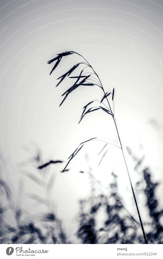 Tristesse on 1 November Nature Summer Autumn Plant Wild plant Grass Thin Authentic Simple Creepy Cold Grief Fatigue Disappointment Loneliness Colour photo