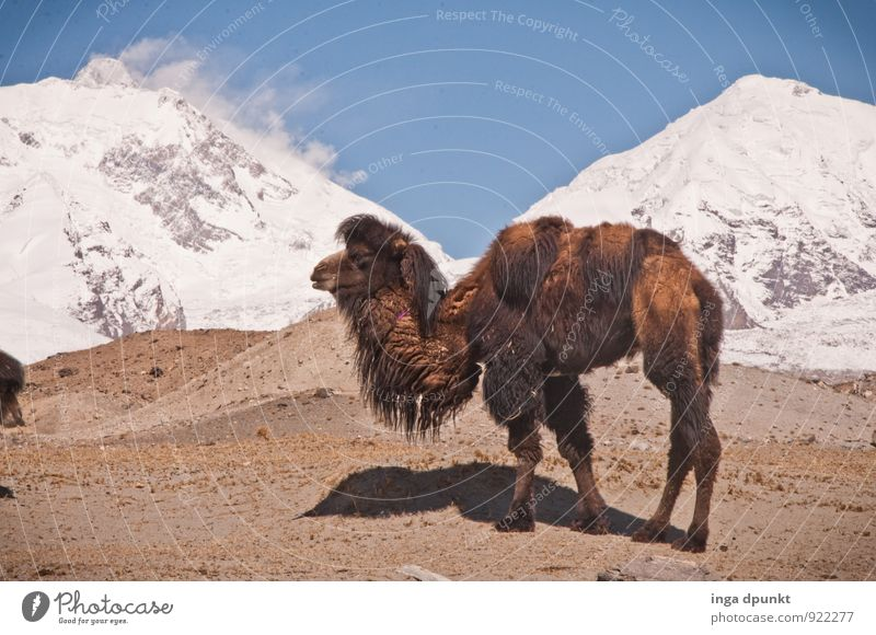 Sky Nature Vacation & Travel Landscape Animal Cold Environment Mountain Exceptional Rock Ice Earth Wild animal Tourism Beautiful weather Elements