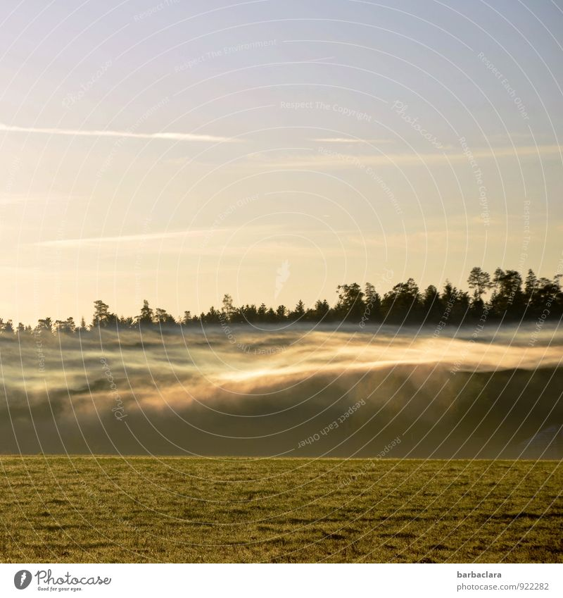 spectre of fog Nature Landscape Air Sky Sun Autumn Fog Meadow Forest Illuminate Exceptional Bright Moody Bizarre Climate Senses Surrealism Environment