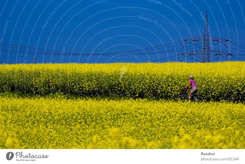 #100 and beyond...:) Canola Canola field Oilseed rape oil Kitchen Culinary Bicycle Cycling tour Vacation & Travel Summer Agriculture Field Farm Electricity