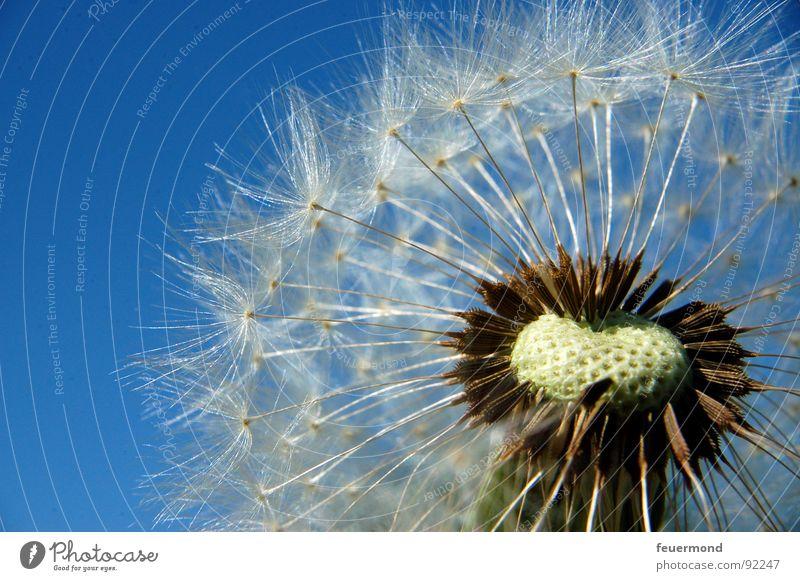 Sky Nature Hand Plant Summer Flower Spring Garden Wind Bouquet Dandelion Blow Seed Blow Propagation