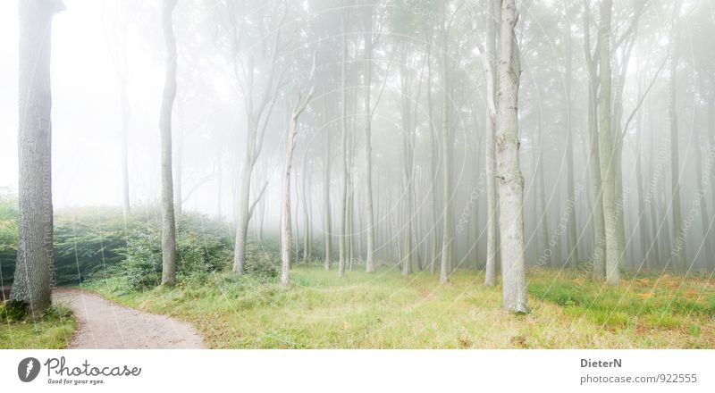 cloud forest Nature Landscape Climate Fog Forest Brown Gray Green Ghost forest Mecklenburg-Western Pomerania Colour photo Exterior shot Deserted Copy Space top