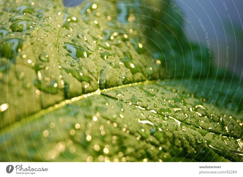 The rain's here!!! Leaf Green Plant Rain Vessel Wet Spring Leaf green Macro (Extreme close-up) Reflection Drops of water Water