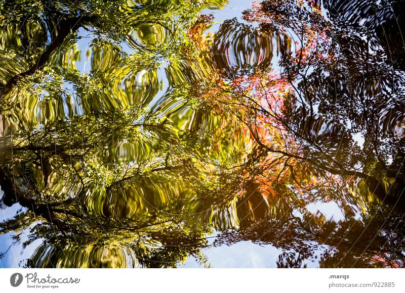 Nature Blue Beautiful Green Colour Water Tree Leaf Environment Yellow Autumn Style Exceptional Orange Elegant Perspective