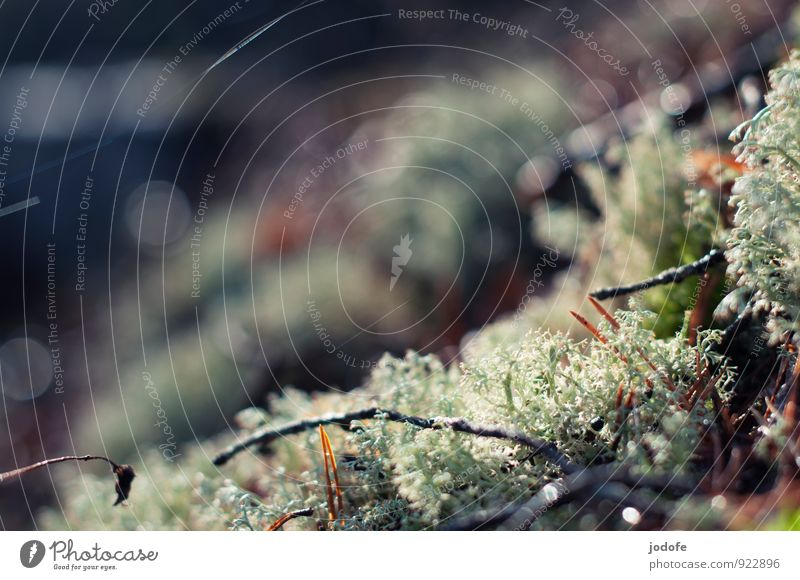 Microcosm II Environment Nature Plant Forest Beautiful Woodground Moss Lichen Twigs and branches Glittering Calm Photomicrograph Autumn Autumnal Colour photo