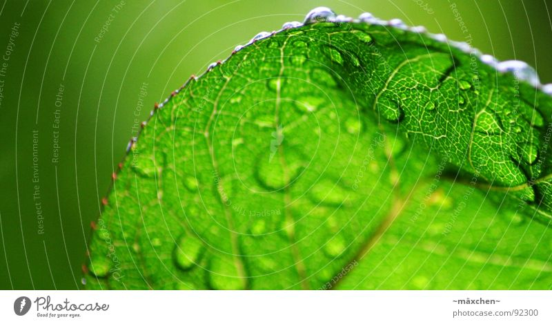 Water Green Tree Plant Leaf Spring Rain Glittering Wet Round Damp Refreshment Vessel Sharp-edged Refrigeration Gaudy