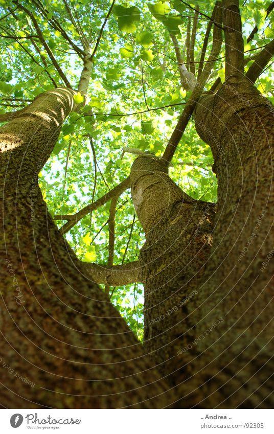 Green Summer Tree Leaf Lighting Lamp Brown 3 Branch Twig Treetop