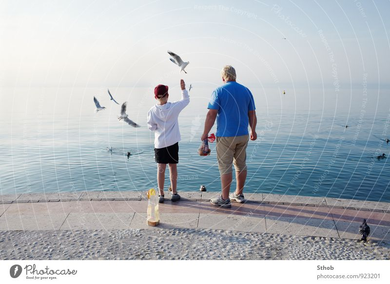 Seagulls feeding at Lake Garda Bread Joy Relaxation Vacation & Travel Trip Sun Masculine Boy (child) Man Adults Father Family & Relations Infancy Life 2