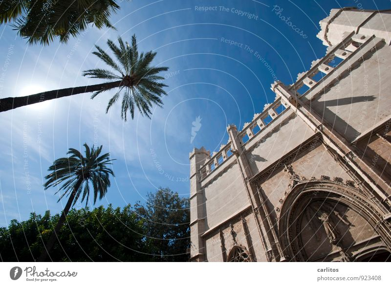Sky Vacation & Travel Summer Tree Warmth Architecture Facade Decoration Esthetic Beautiful weather Tower Capital city Mediterranean Downtown Tourist Attraction
