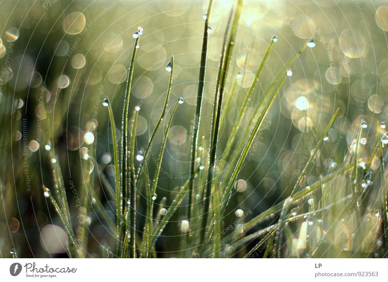 o iarba Environment Nature Landscape Plant Elements Drops of water Grass Glittering Growth Cool (slang) Gray Green Silver Emotions Contentment