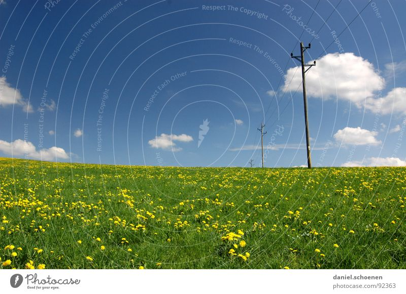 Beautiful Sky Flower Green Blue Summer Clouds Yellow Relaxation Blossom Spring Background picture Weather Electricity Leisure and hobbies Dandelion