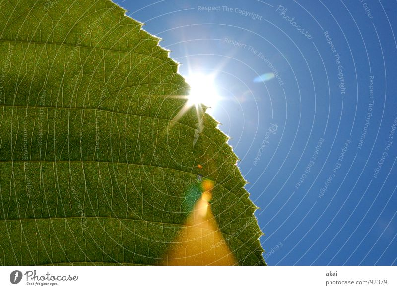 Sheet 8 Plant Green Botany Part of the plant Creeper Verdant Environment Bushes Back-light Leaf Background picture Tree Near Light Photosynthesis Mature Vessel