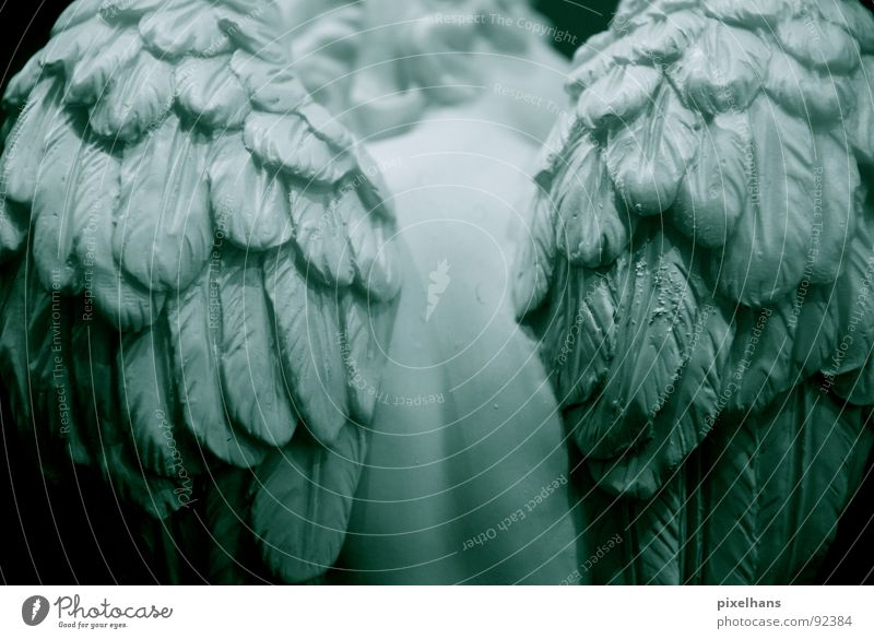 cold silence Angel Statue Sculpture Sculptural Rear view Wing Feather Back Partially visible Detail Section of image White