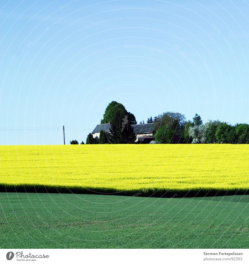 suburban Field Canola Spring May Horizon Physics Far-off places Large Meadow Plant Green Yellow House (Residential Structure) Settlement Tree Forest