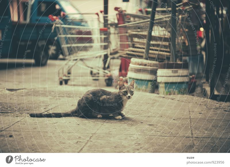 Strays in Palermo Vacation & Travel Tourism City trip Culture Animal Town Old town Street Shopping Trolley Cat Wait Authentic Dirty Gloomy Dry Wild Past