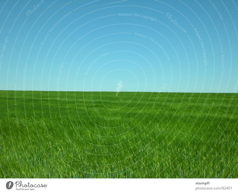 field Spring Summer Field Wheat Air Green Grass Meadow Grain Sky Blue Nature