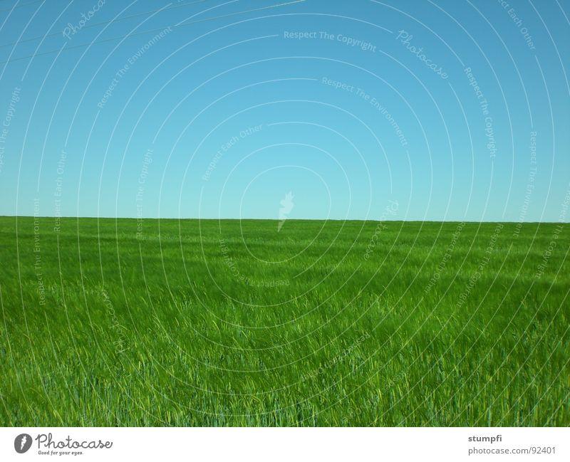 Sky Nature Blue Green Summer Spring Meadow Grass Field Air Grain Wheat