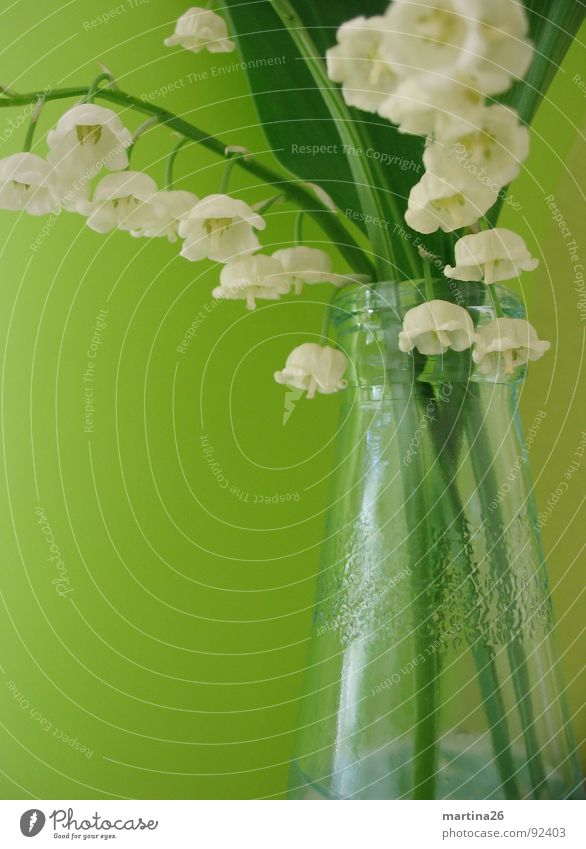 White Flower Green Jump Blossom Spring Glass Fresh Decoration Delicate Stalk Blossoming Fragrance Bouquet Bottle Vase