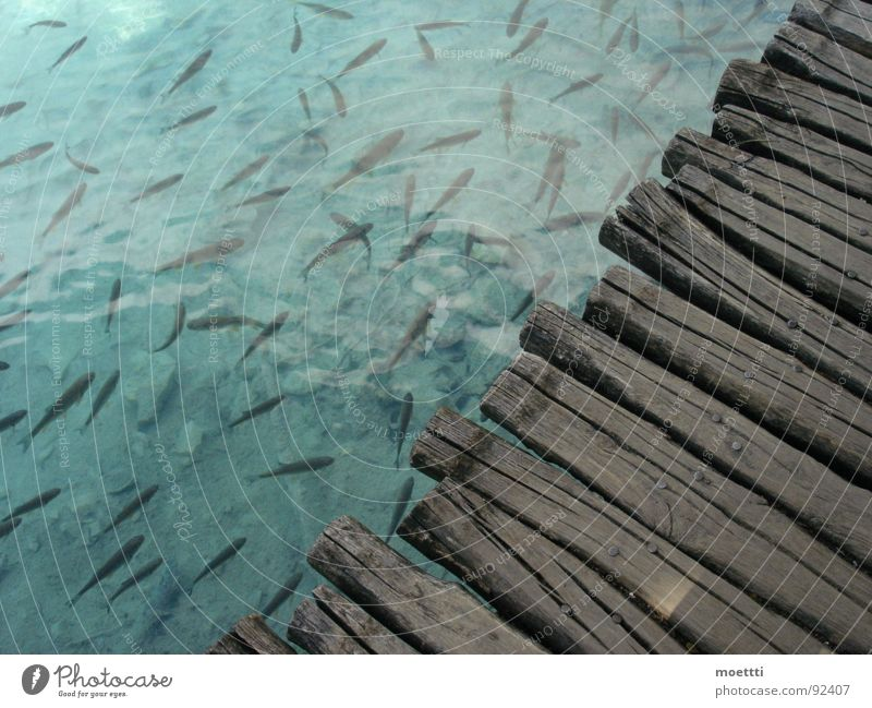 footbridge Croatia Footbridge Shoal of fish Lake water woodbridge shoal plitvicka jezera plitwitzer