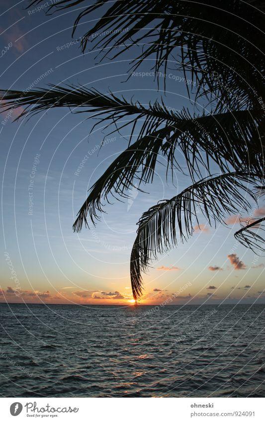 Vacation & Travel Ocean Calm Beach Moody Horizon Beautiful weather Elements Wellness Palm tree Atlantic Ocean Palm frond