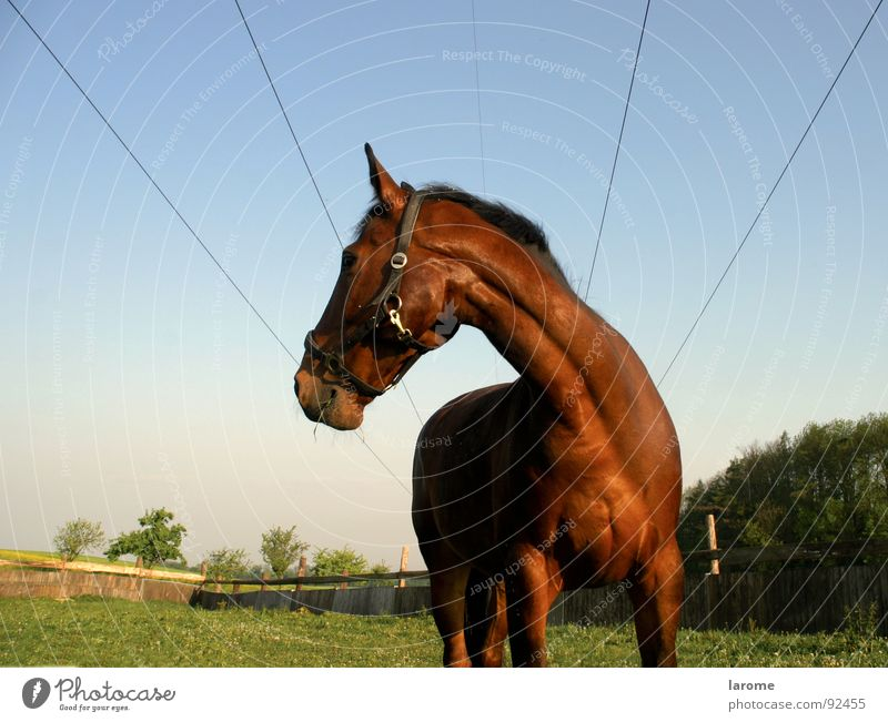 Nature Sky Animal Far-off places Meadow Grass Freedom Brown Horse Cable Farm Agriculture Pasture To feed Mammal Sewing thread