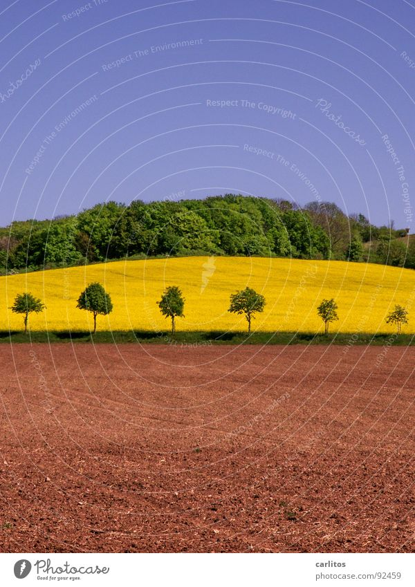 Sky Green Tree Forest Landscape Spring Earth Brown Hill Agriculture Canola Canola field Edge of the forest Fallow land Dark green Row of trees