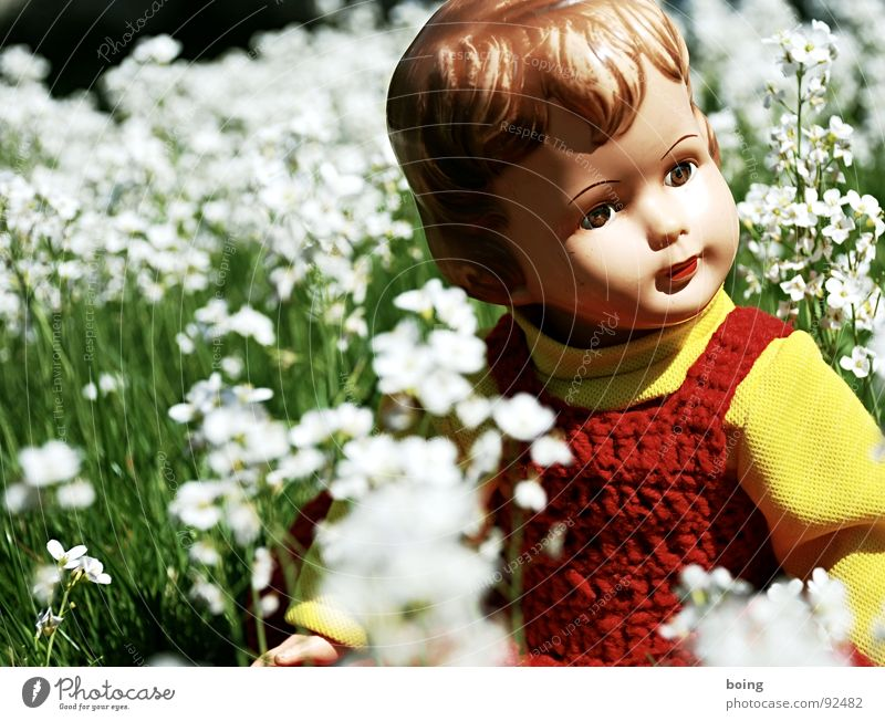 Flower Joy Meadow Playing Spring Garden Blossom Think Trip Toys Doll Horticulture Figure of speech Spring fever Meadow flower Crucifer