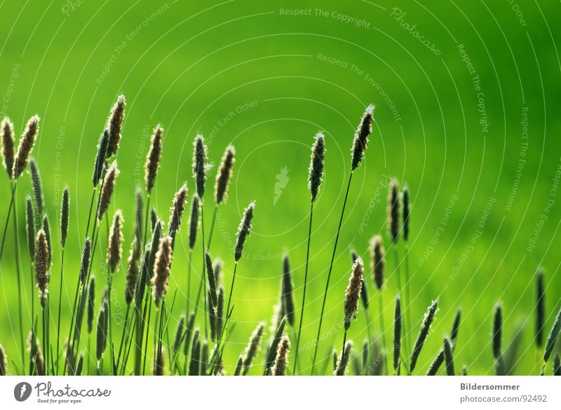 Green Jump Grass Spring Lanes & trails Field Grain Wayside